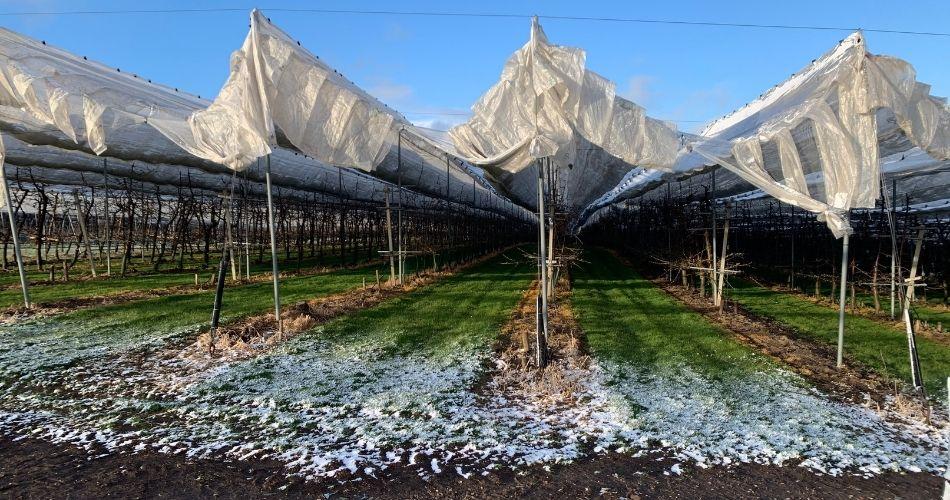 Boomgaard-sneeuw-2