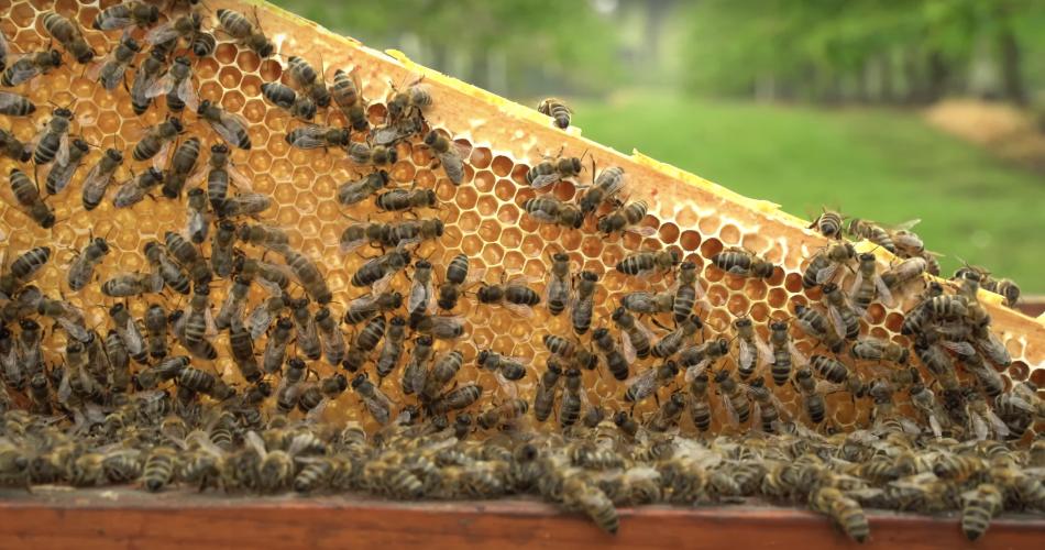 bijen-werken-hard